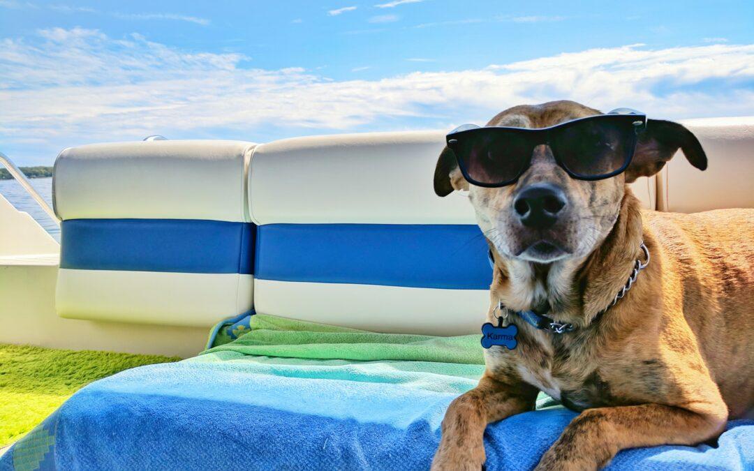 5 claves para que tu mascota no pase calor en verano